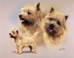 Signed Multistudy Cairn Terrier Print MS1014